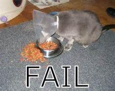 epic fail cat lol