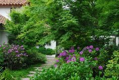 Paisajismo, nicolas sánchez, jardin en Chile. Beatifull garden in Chile, with acer, azalea, cement stone steps, purple colors, different shades of green