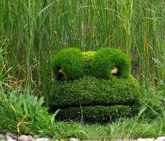 Big Grass Frog - Montreal Botanical Garden