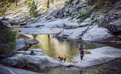 Pips and his handler, Suzie Marlow, investigate a Sierra river crossing while surveying for rare Pacific fishers.