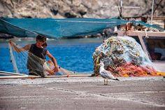 Fisherman & a seabird - Old port - Pera Gialos (photo: George Papapostolou) Old Port, Sea Birds, Greece Travel, Greek Islands, Outdoor Furniture, Outdoor Decor, Hammock, Most Beautiful, Photography