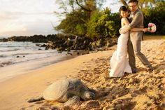 unexpected turtle friend during this beach wedding photo shoot #mauiwedding #beachwedding #turtle