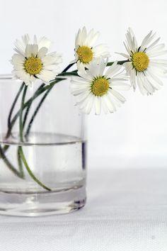 Flores, Aún Así La Vida, Margarita, Florero, Cerrar