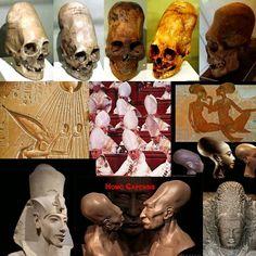 Laura Botelho: Homo Capensis, os deuses do Sempre