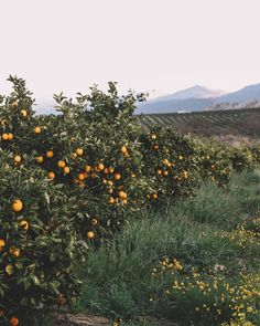 Orange Trees, Bloom, Canning, Clothing, Nature, Travel, Instagram, Outfits, Naturaleza