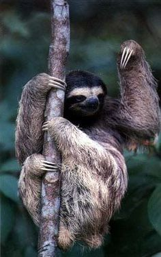 Sloth should go to nail salon for a little trim.