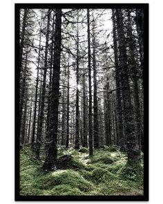 Plakat med trolsk stemning fra den dype, norske og vakre skogen! Wood, Plants, Nature, Madeira, Woodwind Instrument, Wood Planks, Flora, Trees, Plant