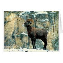 The Bighorn Ram Greeting Card