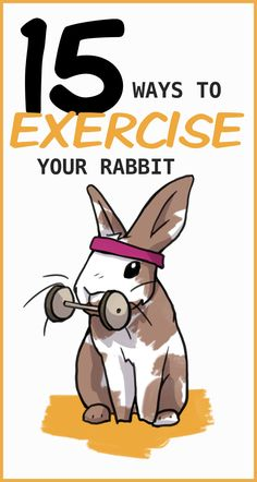 Rabbits are known for being very fast. They were built to run! So of course it's important to make sure your pet rabbit gets enough exercise. Rabbit Run, House Rabbit, Rabbit Toys, Pet Rabbit, Rabbit Garden, Pet Bunny Rabbits, Baby Bunnies, Cute Bunny, Bunny Beds