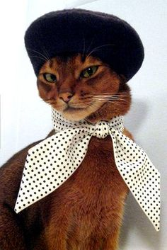 Black Felt Beret- Not sure if I would do this to any of my cats ;) - that gorgeous abyssinian kitty may not feel too comfortable with such a tight foulard around his neck and that beret on her ears, but no one can deny she look soooo chic. Funny Cats, Funny Animals, Cute Animals, Animal Memes, Clever Animals, Crazy Cat Lady, Crazy Cats, I Love Cats, Cool Cats