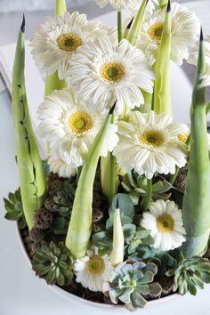 Tiny gerbera bouquet in a white vase #whitegerberas #inspiration #colouredbygerbera #dutchgerbera