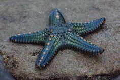 starfish Bathroom theme