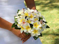 Bouquet de Plumeria (Flor de Mayo)