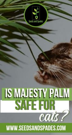 The majesty palm (also known as Ravenea rivularis) is one of several palm species that are popular as houseplants thanks to their ease of care and dramatic effect in any room. If you've got one of these lovely plants in your home and are a cat parent as well, you've probably wondered- is majesty palm safe for cats? In this article, you'll learn more about why majesty palm is a great choice for homes with curious felines or other pets. #majestypalm #majestypalmplants #petfriendlyplants Cacti And Succulents, Planting Succulents, Planting Flowers, Growing Plants Indoors, Growing Vegetables, Amazing Gardens, Beautiful Gardens, Houseplants Safe For Cats, Majesty Palm
