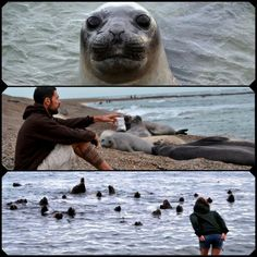 Els nous amics! Our new #friends #Argentina #AroundTheWorld #seals #LaNostraVolta