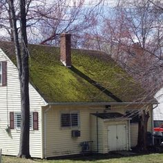 a roof covered with green moss & more inspections no-no's :)