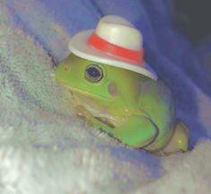 dashing little frog man