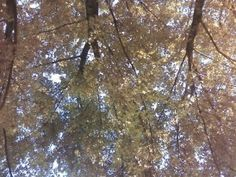 On trampoline looking up<3