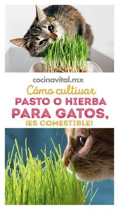 Birds Of Paradise Plant, Cat Plants, Cat Hacks, Cat Playground, Orange Tabby Cats, Cat Garden, Cat Room, Cat Health, Animals And Pets