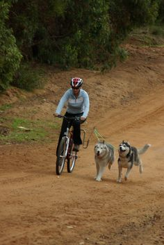 Two huskies running down TeaTree Rd on a Springer bike attachment in Western Australia