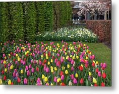 Keukenhof Motley of Colorful Tulips Metal Print by Jenny Rainbow. All metal prints are professionally printed, packaged, and shipped within 3 - 4 business days and delivered ready-to-hang on your wall. Choose from multiple sizes and mounting options. Daffodils, Tulips, Fine Art Prints, Framed Prints, Beautiful Flowers Garden, Any Images, Art Techniques, Botanical Gardens, Spring Flowers