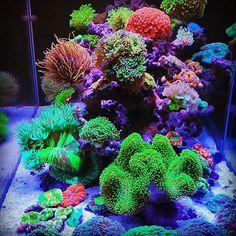 Special tank setup from China powered by X series units. You get what you paid for! Coral Reef Aquarium, Marine Aquarium, Saltwater Aquarium, Aquarium Fish Tank, Planted Aquarium, Fish Tanks, Mandarin Fish, Coral Tank, Aquarium Lighting