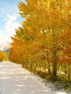 """Autumn in Aspen, CO after seven inches of snow.  """"Nature is the art of God."""" ~ Dante"""