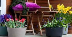In februari en maart is er vaak nog weinig kleur te zien om het huis. Een kale border of kleurloos terras biedt niet de leukste aanblik. Gelukkig is er een snelle manier om balkon of tuin meteen in lentesferen te brengen.