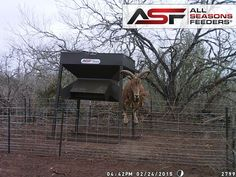 All Seasons Feeders is a leading provider of wildlife feeders, protein deer, broadcast feeders, BBQ pits in Texas to fit your unique style. Deer Feeders, Ranch, Hunting, Protein, Wings, Seasons, Photos, Outdoor, Guest Ranch