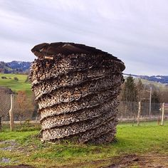 This is a really nice woodpile