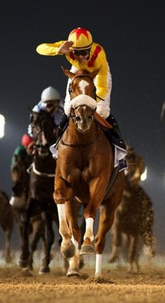 Surfer, by Distorted Humor out of Surf Club, winning the 2015 Maktoum Challenge Round 1 (G2) on the dirt at Meydan in Dubai. Andrew Watkins Photo/Dubai Racing Club.