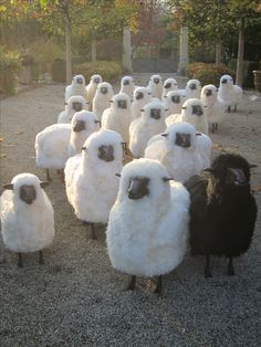 The sheep invasion continues...be part of the revolution.