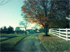 Walking, I highly recommend it! | HSLDA Blog