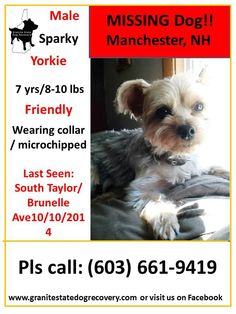 "Missing since 10/10/2014 - Manchester, NH - ""Sparky"" is a 7 year old, 8-10 lb, Male, Yorkie. He is Tan/Silver, friendly, microchipped and wearing a collar. He was last seen on South Taylor near Brunelle Ave. He may have been picked up by a good samaritan walking a black dog. Please share to help get Sparky home.(djc)  Pls. Call: (603) 661-9419 or (603) 556-0115"