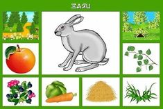 Toddler Learning Activities, Preschool Activities, Emotions Preschool, Alphabet Templates, Science Education, Educational Toys, Kindergarten, Homeschool, Montessori