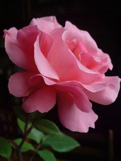 38 Ideas For Garden Rose Bouquet Pink Florists 38 Ideas For Garden Rose Bouquet Pink FloristsYou can find Pink roses and more on our Flowers Nature, Exotic Flowers, Amazing Flowers, Love Flowers, Beautiful Roses, Garden Rose Bouquet, Rainbow Roses, Flower Aesthetic, Flower Petals