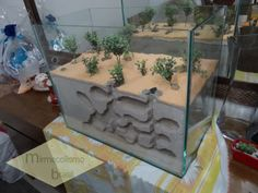 Formicarium Pictures Only! (many big photographs/photos.) in Keeping Ants Forum