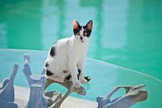 #acqua #cat #patmos #blu #blue Tinkerbell, Disney Characters, Fictional Characters, Traditional, Disney Princess, Cats, Blue, Gatos, Kitty Cats