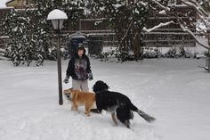 One year ago:  It's in the 70's today, but one year ago, the backyard was a winter wonderland for a 9-year-old boy and two playful dogs.