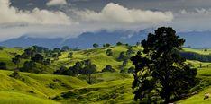 Matamata: la aldea hobbit del Señor de los Anillos