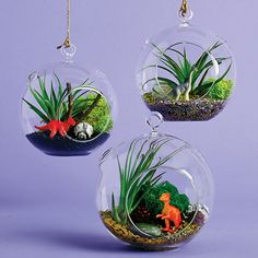 This easy DIY terrarium is the perfect spring (or summer, fall or winter!) activity for kids. Photo: Tony Lanz