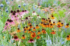 Plant vaste planten waarvan je de bloemen in de zomer kunt plukken om in een vaas te zetten