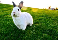Hello Tolly Fine Art Bunny Photography Home by invisibletoast
