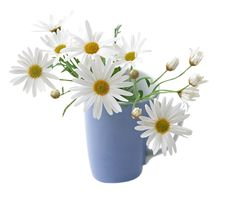 Indoor Shots : Flowers of Elegance - White Marguerite in a Cup 30 Types Of Flowers, Cut Flowers, Never Grow Old, Blue Cups, Little Flowers, Flower Art, Tulips, Good Morning, Morning Gif