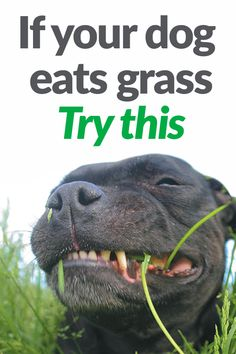 Richter offers the key to help maximize immunity, health, & digestion. Richter offers the key to help maximize immunity, health, & digestion. Dog Training Treats, Training Your Dog, Training Collar, Training Pads, Training Classes, Agility Training, Dog Agility, Training Equipment, Potty Training