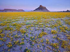 design-dautore.com: Un fiore nel deserto