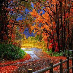 Foto bosque otoñal.