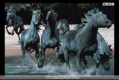 Cudowne konie <3