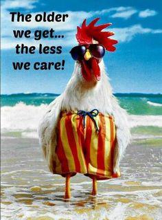 Funny happy birthday wishes animals Ideas Birthday Wishes Funny, Happy Birthday Quotes, Birthday Greetings, Happy Birthday Chicken, Funny Happy Birthday Images, Birthday Humorous, Birthday Sayings, Humor Birthday, Sister Birthday
