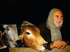Kurma Rupa Dasa Prabhu... Care for Cows